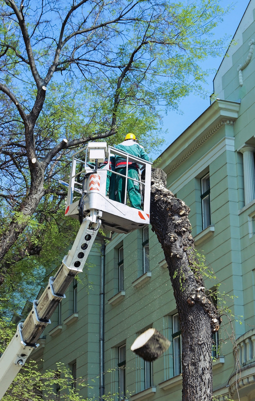 Professional Tree Removal Tree Service Riverdale