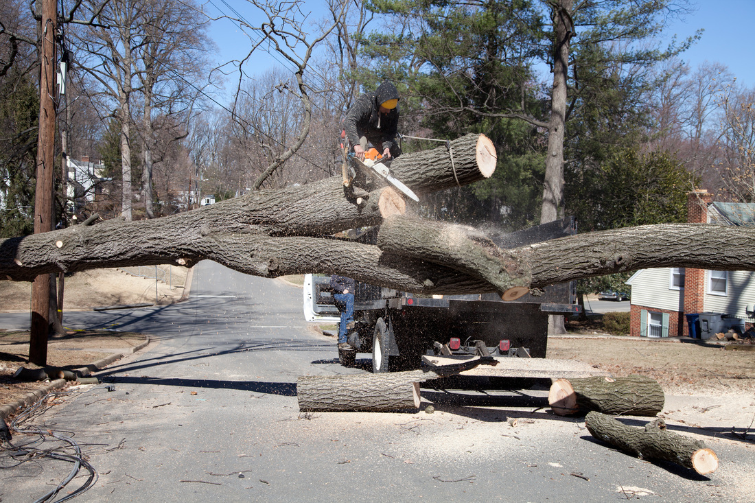 Tree Removal Tree Service Riverdale